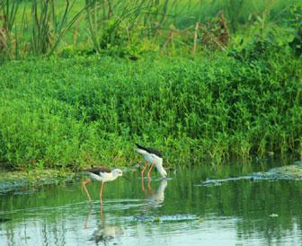 Kalametiya birds sactury sri lanka